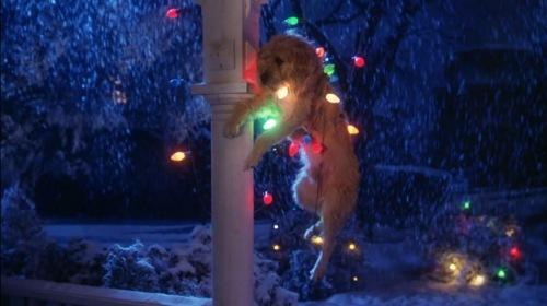 045 Gremlins Dog